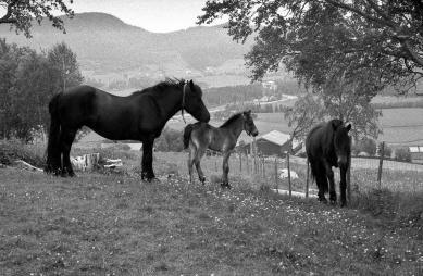 ES hesttrøa-1