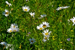 Blomstereng r2 5