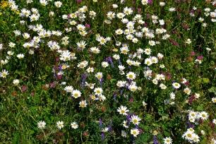 Blomstereng r2 6