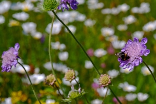 Blomstereng r2 7