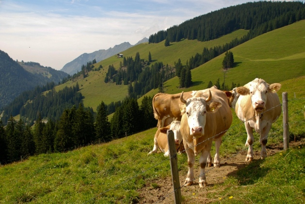 Kulturlandskap Sveits