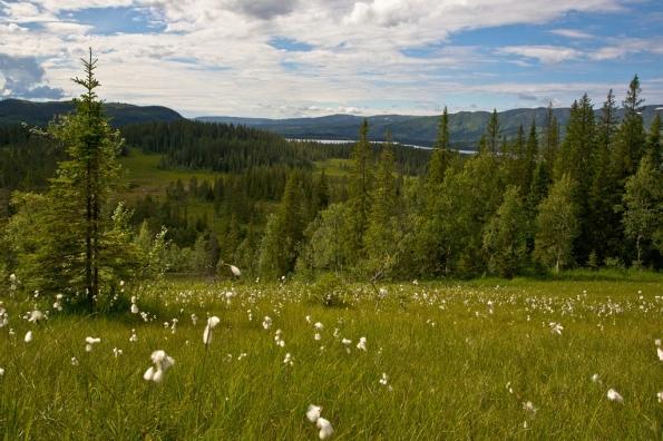 Utmark Høylandet