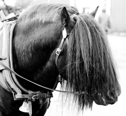 Hest r-1
