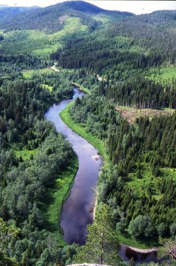 Skog og utmark014