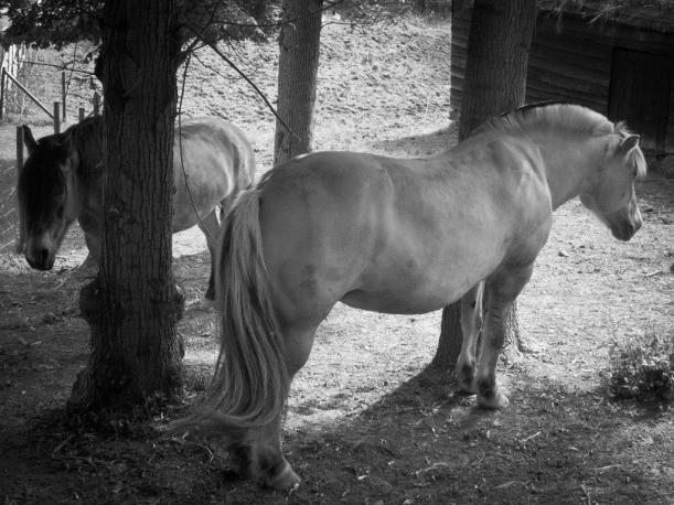 Hester r-1