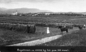 Angelltrøa 1911