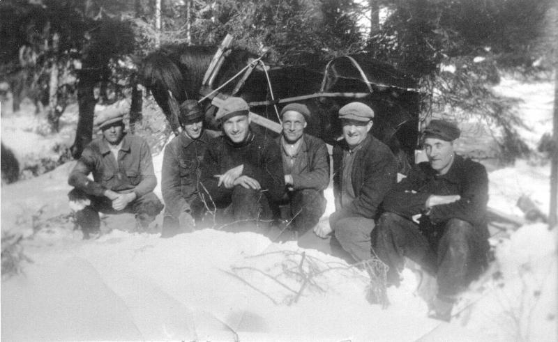 Skogsdrift i Bjørgfjellet ca 1950 r